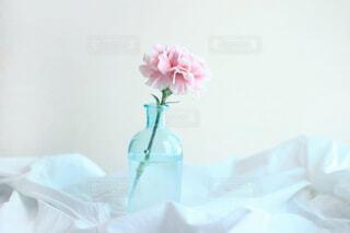 朝のピンクカーネーションの写真・画像素材[4318030]
