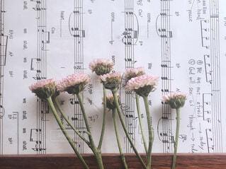 自然,花,テキスト,メロディー