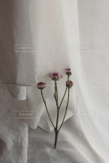 花,屋内,白,壁