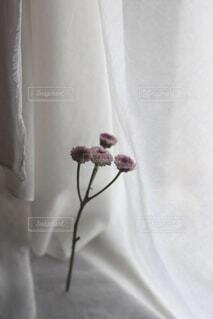 花,屋内,白,花瓶