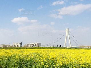 自然,風景,春,黄色,菜の花,旅行,埼玉,yellow