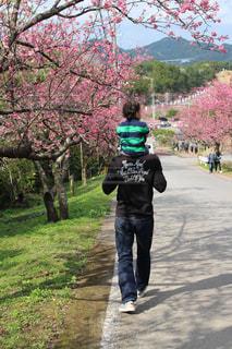 自然,風景,桜,ピンク,緑,南国,景色,樹木,道