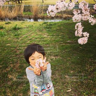 子ども,花,桜,かわいい,子供,樹木,人物,人,幼児,兄弟,通り,カラー,ライフスタイル