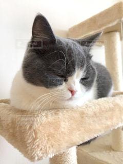 家族,猫,屋内,白,昼寝,ねこ,ペット,子猫,人物,癒し,キャットタワー,お昼寝,キティ,ネコ,スヤスヤ