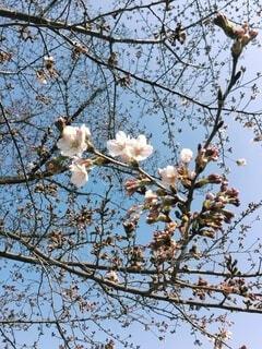 春の気配の写真・画像素材[4858984]