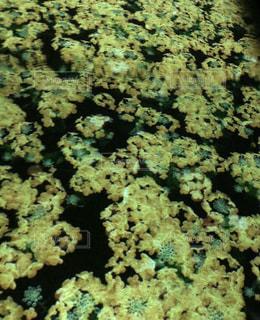 黄色,菜の花,光,イエロー,フォトジェニック,ネイキッド,フラワーズバイネイキッド