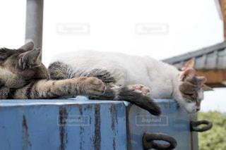 猫の日常は海外でも同じの写真・画像素材[1823911]