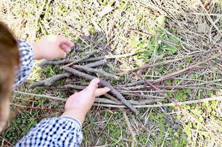 公園で枝を集める子どもの手元の写真・画像素材[1873012]