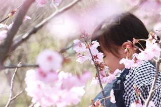 桜の木と女の子の写真・画像素材[2011280]