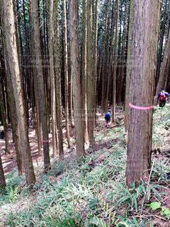雑木林の奥に登山する人の写真・画像素材[2215688]