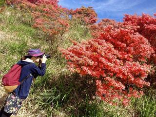 ツツジを撮影する女性の写真・画像素材[2216219]