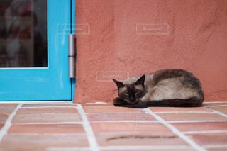 入り口の横でお迎えする猫の写真・画像素材[2293847]