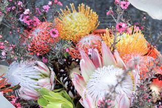 カラフルな珍しいお花の写真・画像素材[2387957]