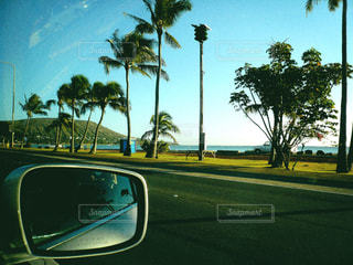 ヤシの木の通りを走る車の写真・画像素材[2434284]