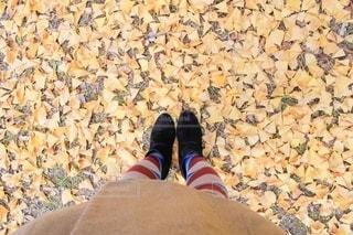 銀杏の葉がたくさん落ちている足元の写真・画像素材[2555107]