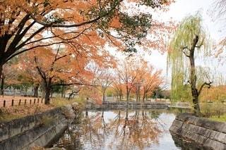 池のある秋の風景の写真・画像素材[2594540]