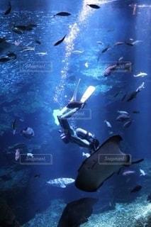 水中の飼育員の写真・画像素材[2664861]