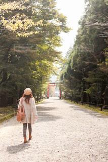 女性の後ろ姿と鳥居の写真・画像素材[2814081]