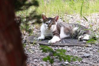 猫,動物,屋外,草,ペット,人物,座る,マンホール,地面,石,ネコ