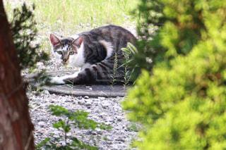 猫,動物,屋外,草,樹木,ペット,人物,マンホール,地面,石,視線,ネコ