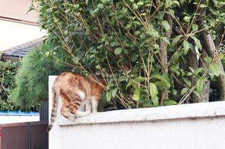 猫,建物,動物,屋外,足,樹木,ペット,人物,壁,お尻,かくれんぼ,おしり,ネコ,侵入者,訪問,頭隠して尻隠さず,侵入