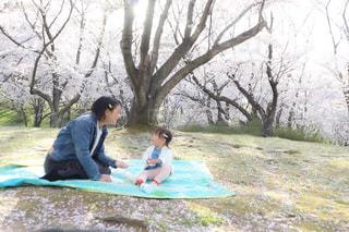 女性,子ども,家族,2人,風景,公園,桜,屋外,親子,花見,少女,樹木,ピクニック,人,赤ちゃん,幼児,デニム,娘,お母さん,桜の花,桜の木,シート