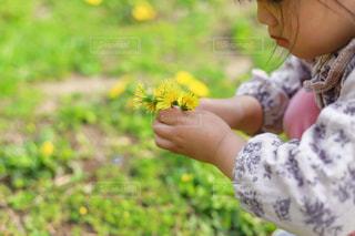 タンポポを摘む女の子の写真・画像素材[3142234]