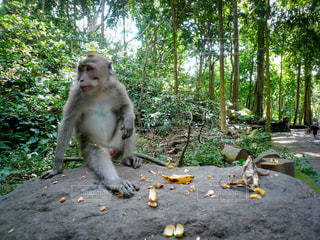 休憩中の猿の写真・画像素材[3143062]