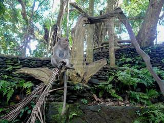 木の上に座っている猿の写真・画像素材[3143063]