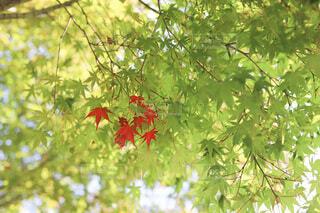 秋の始まりの写真・画像素材[3812392]