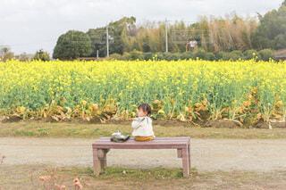 菜の花畑で散歩の写真・画像素材[4218367]