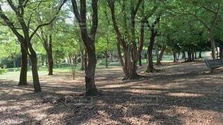 自然,公園,夏,木,屋外,太陽,植物,葉,樹木,虫取り,ネット,網,夏休み,グリーン,自然光,日中,動画