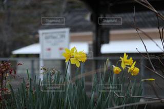 黄色,色,鹿児島,横川駅