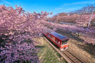 空,花,桜,植物,青空,花見,お花見,列車,三浦海岸,三浦半島,さくら,京急線,京急