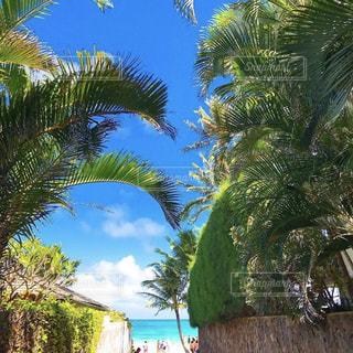 海外,ビーチ,ヤシの木,ハワイ,Hawaii,海外旅行