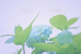 花 - No.551481