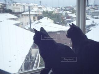 猫,冬,雪,窓辺,黒猫,出窓,冬休み