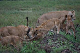 家族,大自然,旅行,旅,海外旅行,サファリ,タンザニア,セレンゲティ国立公園,親子の再会
