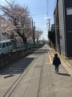 桜,満開,お散歩