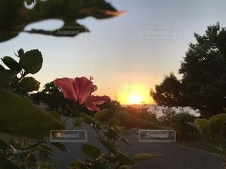 木の花の花瓶の写真・画像素材[1864842]