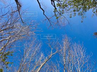 雑木林から空を見上げればの写真・画像素材[1882297]