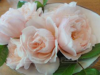 薔薇の写真・画像素材[1884678]