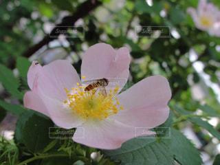花と虫の写真・画像素材[2123930]