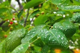 雨上がりの写真・画像素材[2140387]