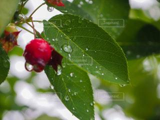 雨と仲良しの写真・画像素材[2176842]