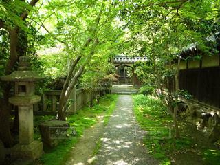 桃巖寺の写真・画像素材[2395765]
