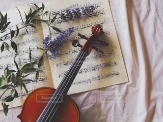 ヴァイオリンとドライフラワーの写真・画像素材[2485290]