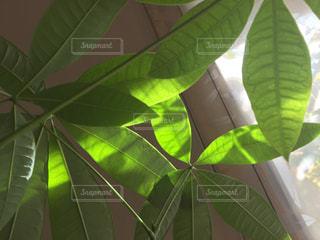 緑の植物のクローズアップの写真・画像素材[2733043]