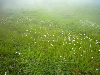 緑の畑のクローズアップの写真・画像素材[3028240]