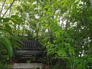 木の隣に座っている木のベンチの写真・画像素材[3336516]